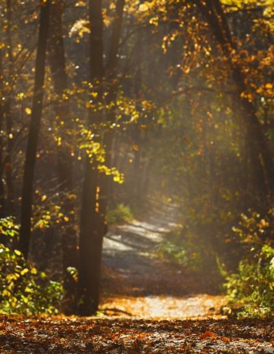 Walking path in forest with beautiful sunbeams