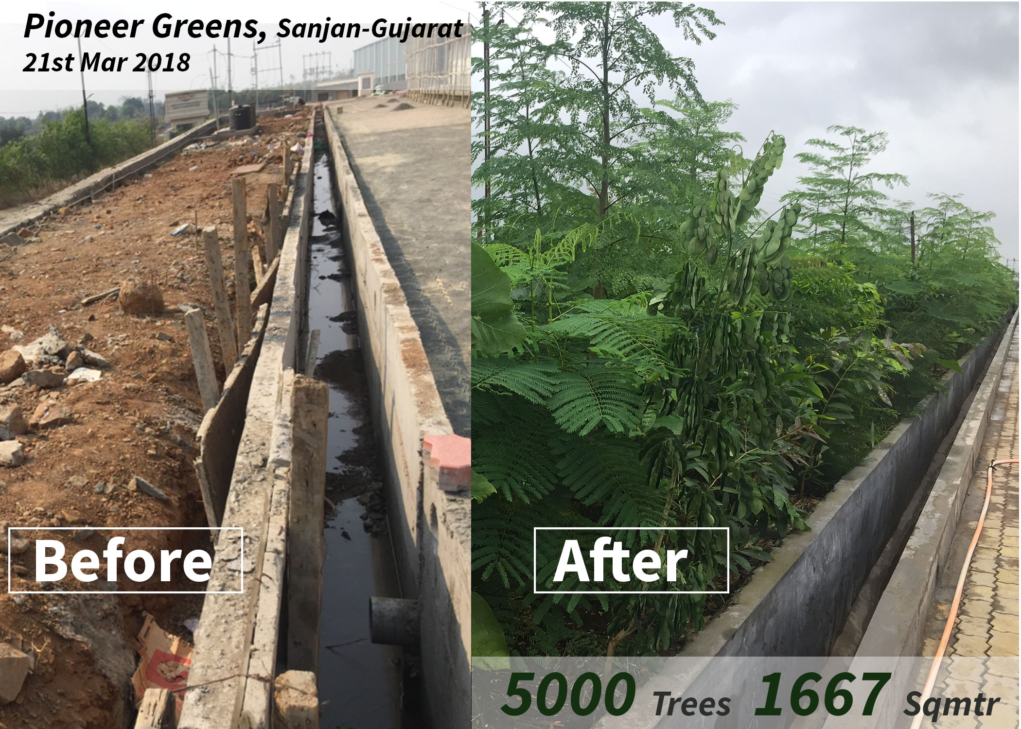 Pioneer Greens before and after
