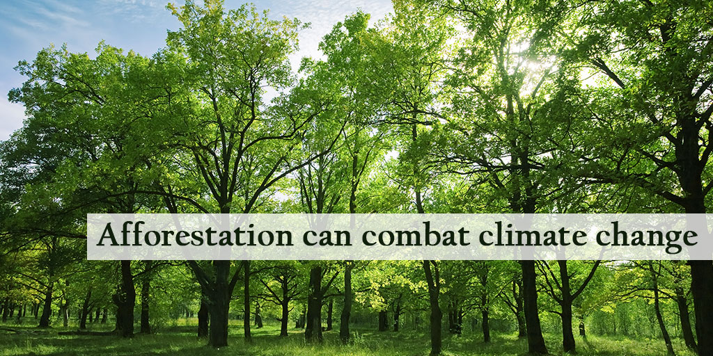 Why Afforestation is Vital To Combat Climate Change
