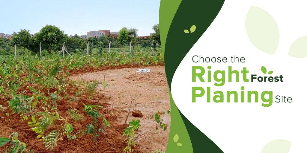 Forest Planting: 3 Things to Consider Before Choosing the Right Planting Site